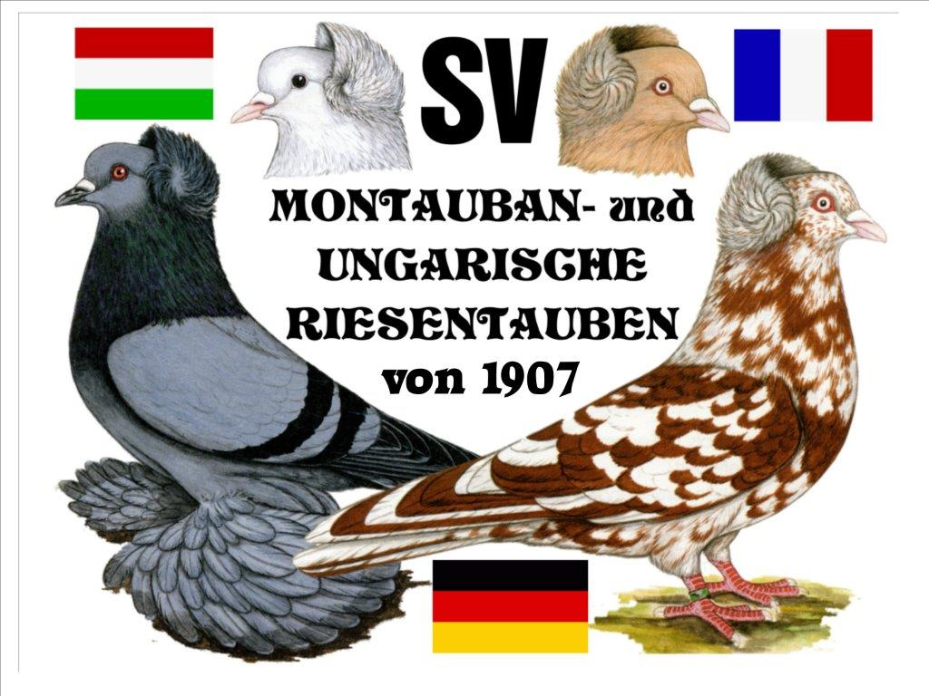 SV Montauban- und Ungarische Riesentaube e.V.